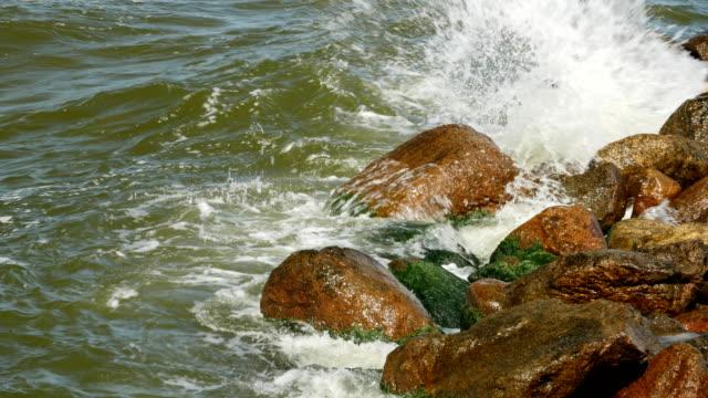 vidéos et rushes de bord de mer aux algues vertes et moussues sur les pierres dans l'eau - botanique
