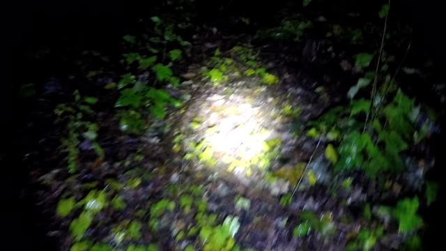 POV shot as you walk through a spooky scary rain forest at night. POV shot as you walk through a spooky scary rain forest at night. Trees and leaves in the darkness. flashlight stock videos & royalty-free footage