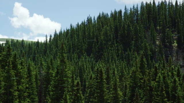Shot from a Moving Vehicle of Forests in the San Juan Mountains in Colorado as Seen from Red Mountain Pass (Million Dollar Highway/US 550) through the Rocky Mountains in Summer on a Partly Cloudy Day