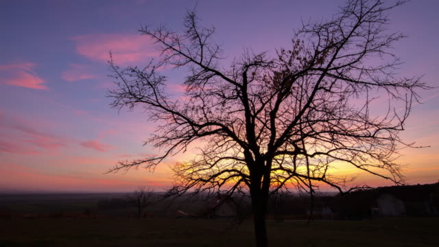 T/L 8K shot of a bare tree at dusk video