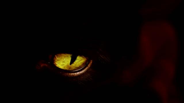 매우 노란 눈을 가진 검은 고양이의 4k 샷. - black friday 스톡 비디오 및 b-롤 화면