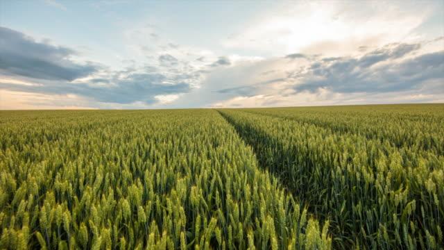 麦畑で cloudscape の t/l 8 k ショット - 熟していない点の映像素材/bロール