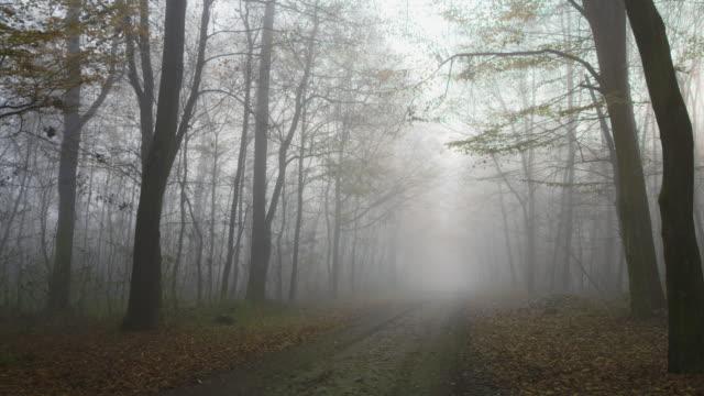 shot van een mistige bos video