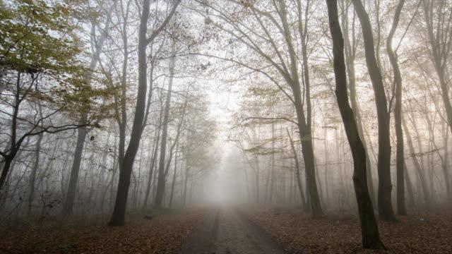 T/L 8K shot van een wandelpad door mistige bos video