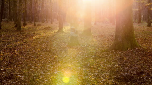 T/L 8K shot of a forest undergrowth in sunrise – film