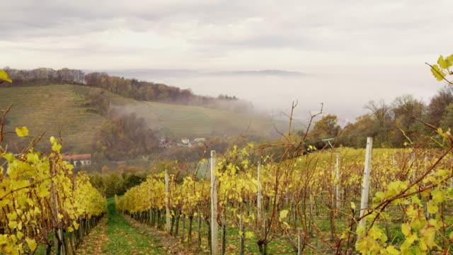 ds skott av en kuperad vingård i dimman - steiermark bildbanksvideor och videomaterial från bakom kulisserna