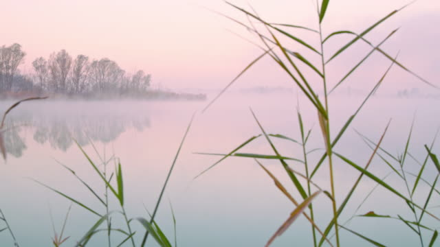 shot of a lake in the fog Dolly shot of a lake in the fog. Also available in 8K resolution. marsh stock videos & royalty-free footage