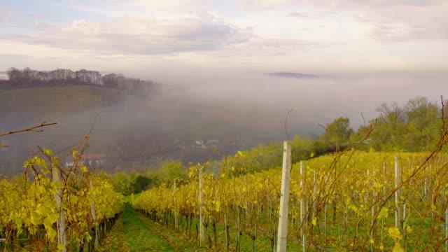 ds skott av en vingård i dimman - steiermark bildbanksvideor och videomaterial från bakom kulisserna
