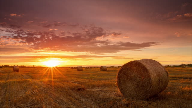 T/L 8K shot of candid sunrise over field of bales video