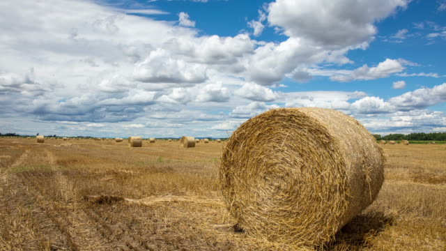 T/L 8K shot of cloudscape over field of bales video