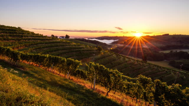 T/L 9K shot of hilly vineyards at sunset video