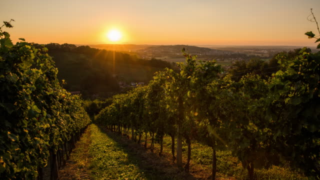 T/L 8K shot of hilly vineyards at sunset video