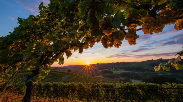 T/L 8K shot of the vineyard at sunrise video
