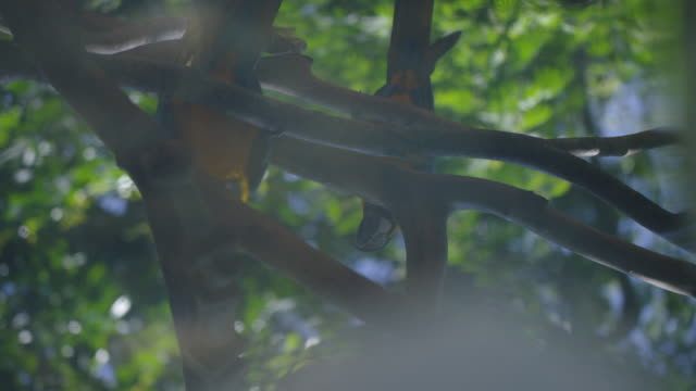 Shot of two toucans on the branch of a tree in the middle of the jungle video