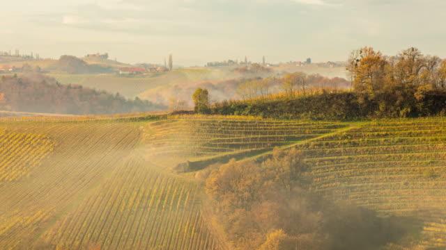 T/L 8K shot of vineyards in the fog video