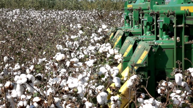 POV Shot on a cotton harvester during cotton harvest in a field. 250 FPS Slow Motion