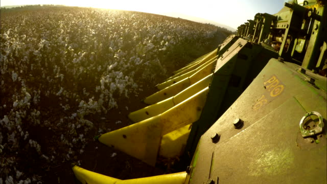 POV Shot on a cotton harvester during cotton harvest in a field