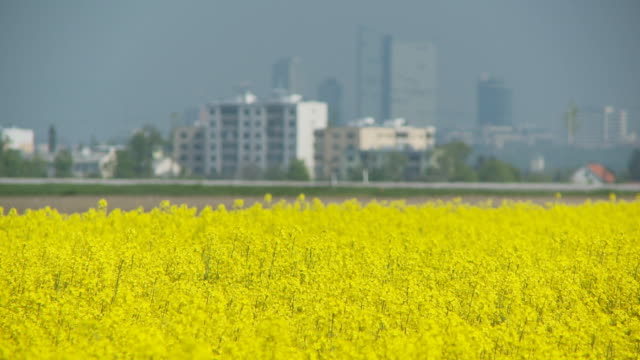 shot transition rape field and city video