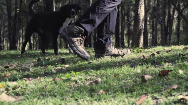 sköt kvinna ben vandring, utforskar hiker kvinnor promenader med hund begreppet skog naturliga äventyr - hund skog bildbanksvideor och videomaterial från bakom kulisserna