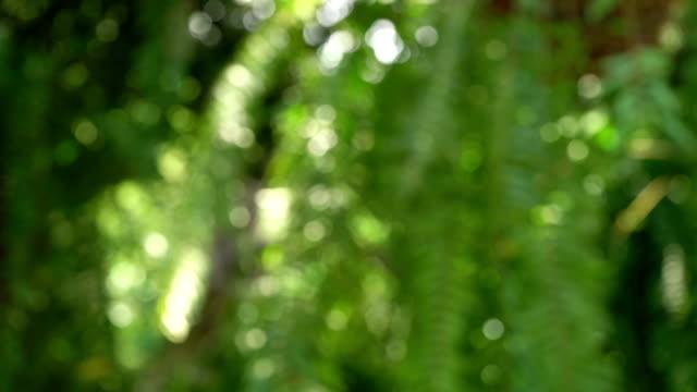 2 Shots of Blurred Natural Backgrounds (Tilt Down, Panning)