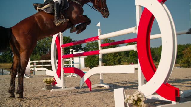salto ostacoli equestre - attività equestre ricreativa video stock e b–roll