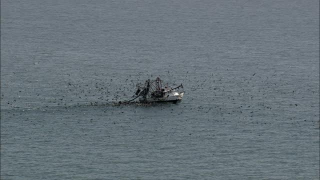Shrimp Boat At Sea With A Mass Of Birds  - Aerial View - North Carolina,  Brunswick County,  United States