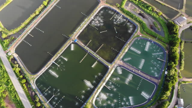 vídeos de stock e filmes b-roll de shrimp farm is an economic animal for export and domestic consumption - aquacultura