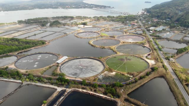 Shrimp farm is an economic animal for export and domestic consumption