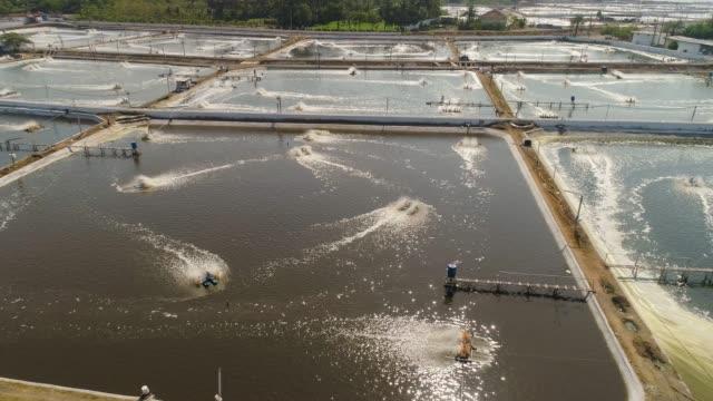 shrimp farming in indonesia