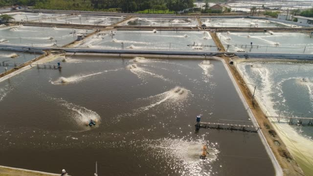 vídeos de stock e filmes b-roll de shrimp farming in indonesia - aquacultura