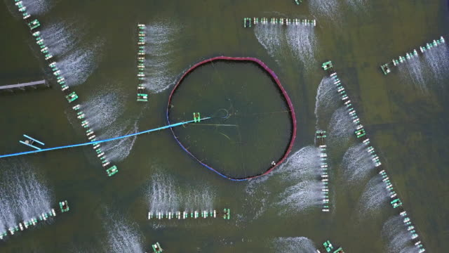 Shrimp farms from above Shrimp farms from above in Sam Roi Yot National Park, Thailand damascus stock videos & royalty-free footage