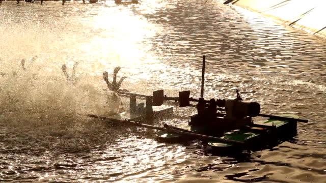 Shrimp farms twilight time golden light video