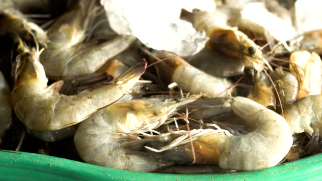 Shrimp on the counter of a street market video