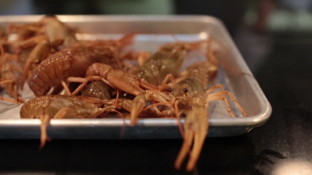 shrimp shrimp arthropod stock videos & royalty-free footage