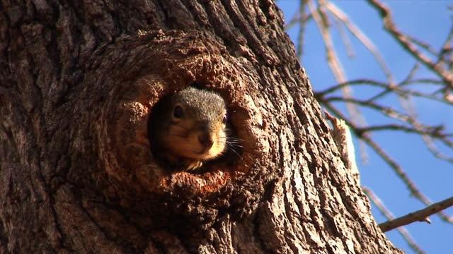 timido scoiattolo - animale video stock e b–roll