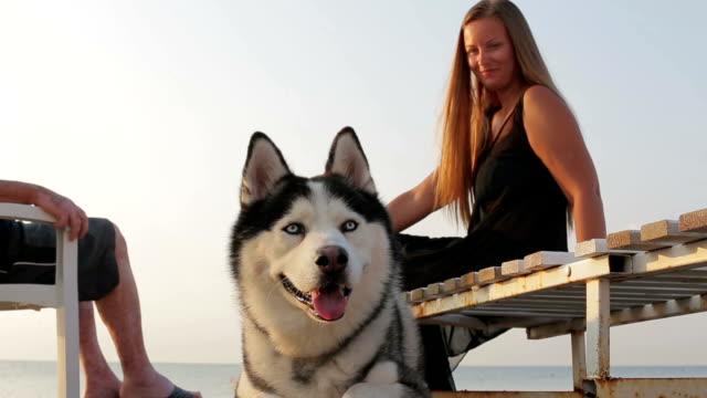 siberian husky girl plays with a dog on the beach - cane husky video stock e b–roll