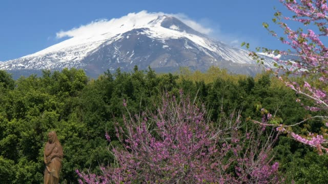 sicily, italy. blooming spring trees in the park giardino bellini in catania and snowy mount etna on background - sicily filmów i materiałów b-roll