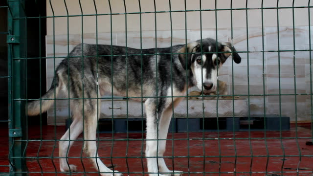 kranke, verkrüppelte und verlassene verlassene hunde in einem tierheim. gefangene tiere - käfig stock-videos und b-roll-filmmaterial