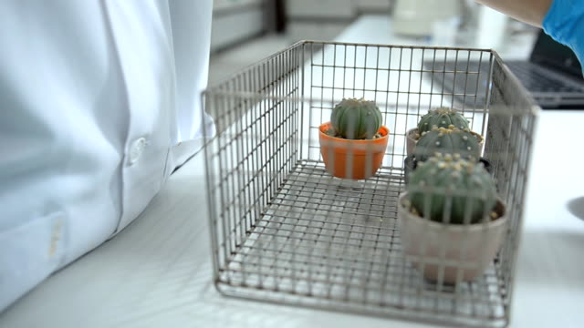 side panning : move cactus specimens in racker video
