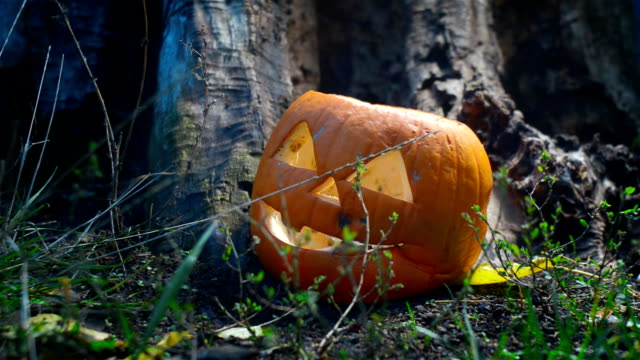 Side shot of a terrible rotten pumpkin near an old wooden stump is lit by a bright light that moves in different directions. Closeup of a jack-o-lantern prepared for Halloween video