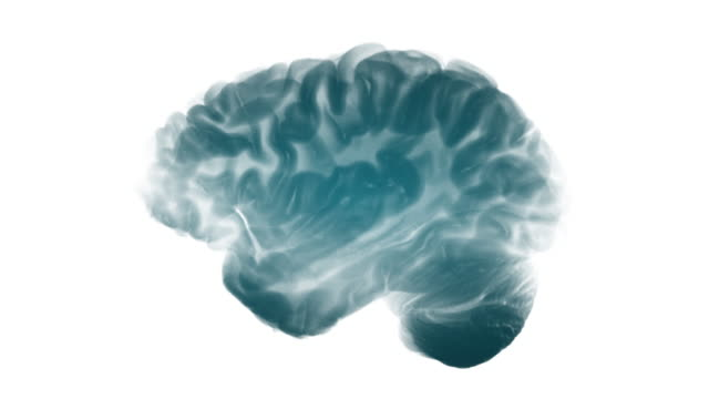 Side View Brain On White Background. Neurological Diseases, Tumors And Brain Surgery