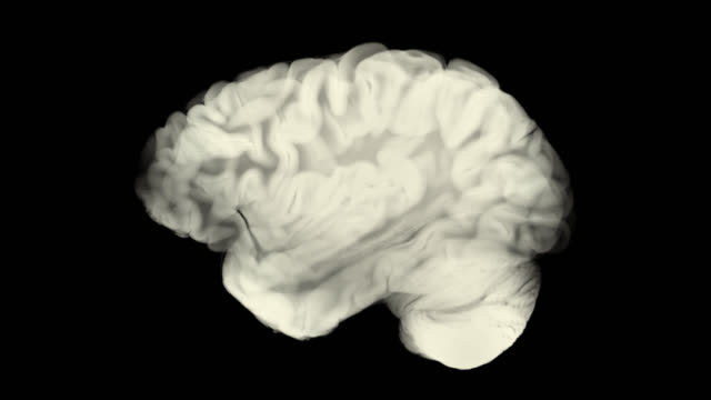 Side View Brain With Alpha Matte. Neurological Diseases, Tumors And Brain Surgery