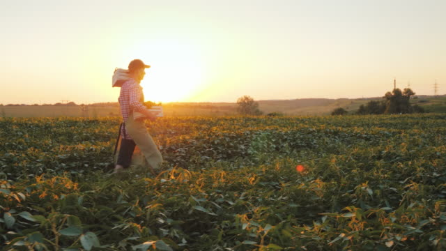 side view of a young male farmer walks along the field with a two crates of fresh vegetables - aktywny tryb życia filmów i materiałów b-roll