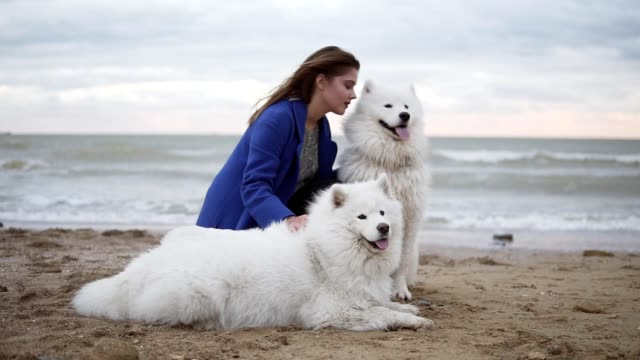 vídeos de stock e filmes b-roll de side view of a young woman sitting on the sand and embracing her dogs of the samoyed breed by the sea. white fluffy pets on the beach having fun. beautiful sky on the background. slowmotion shot - samoiedo