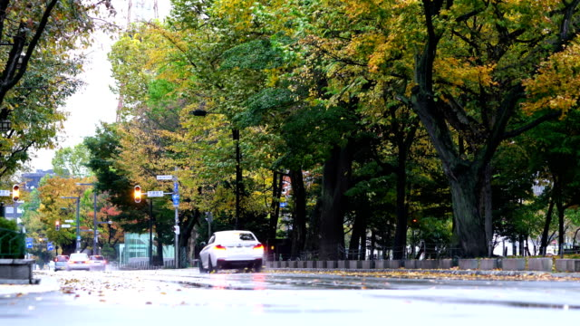side view of sapporos odori park on hokkaido - maple leaf stock videos & royalty-free footage