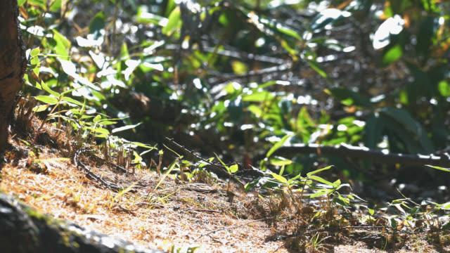 vahşi bebek japon makak besleme yan görünüm - japon makak maymunu stok videoları ve detay görüntü çekimi