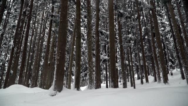 雪に覆われた白川郷村で歩いている間密度松林を表示するサイド ビュー - 冬点の映像素材/bロール