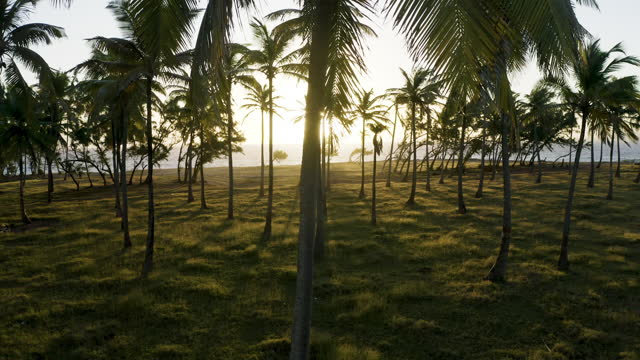 Sideways tracking shot of palm trees at dawn (1) video