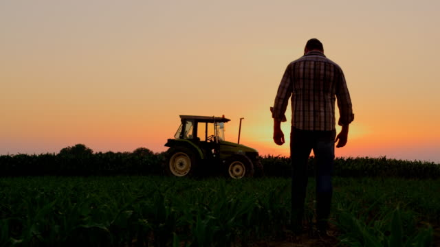 la silhouette farmer examining plants on a field at sunset - trattore video stock e b–roll