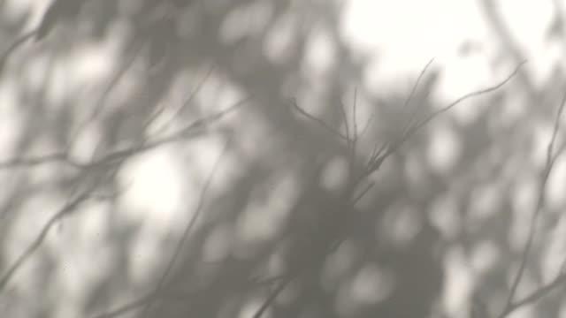 樹葉和樹枝對白色牆壁的剪影移動的陰影 - 影 個影片檔及 b 捲影像
